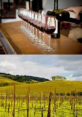 Wine Country Tour Half-Day & Full-Day