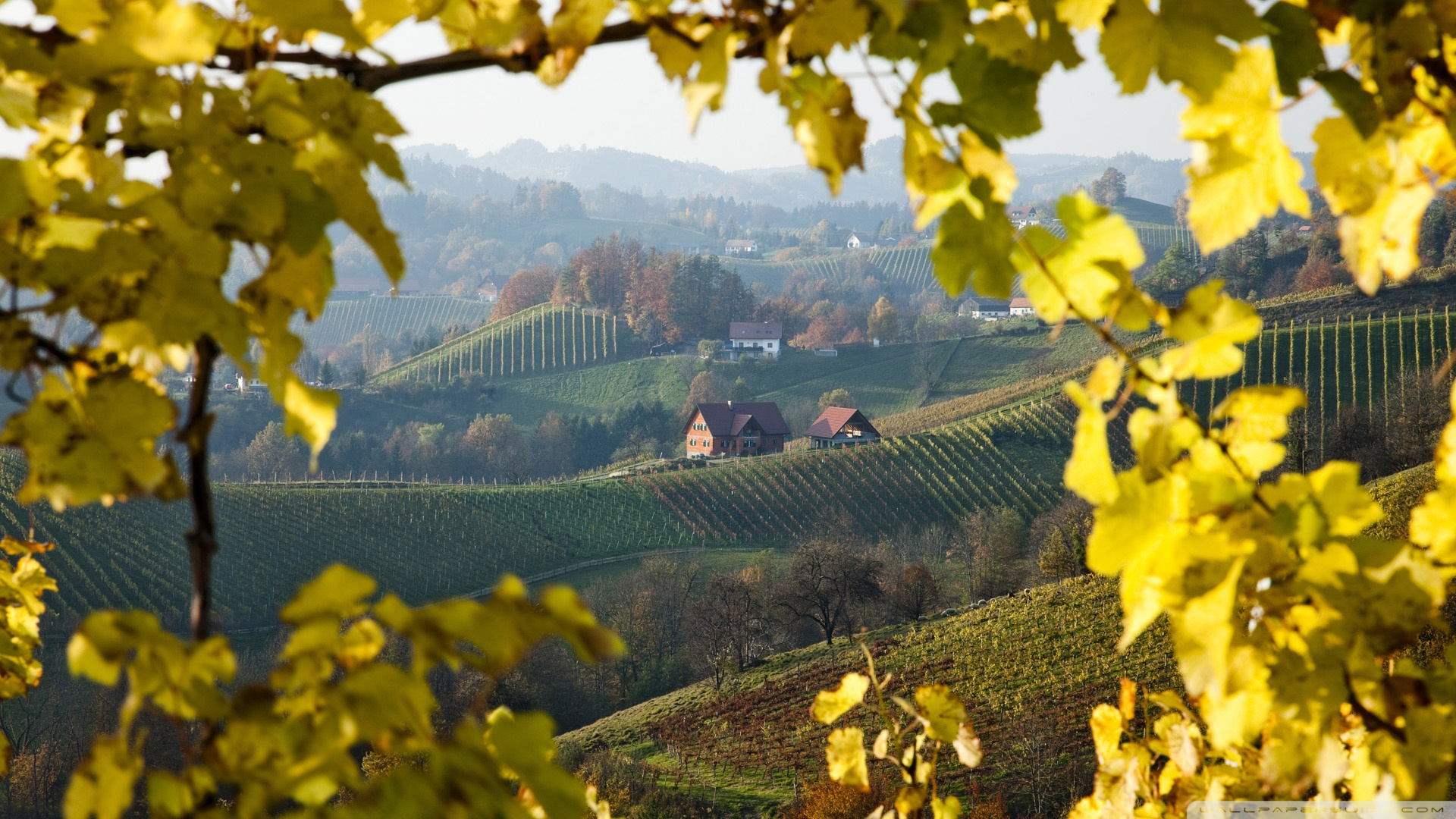 vineyard_near_gloss_on_the_wine_route_styria_austria-wallpaper-1920x1080
