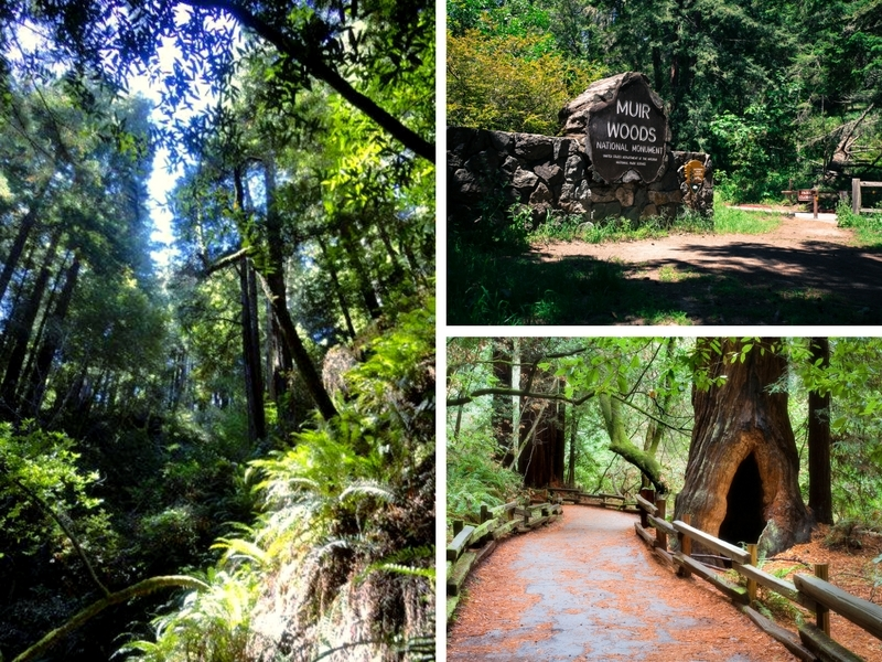 Ten Reasons to Visit the Muir Woods National Monument